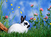 RAB 01 KH0030 01