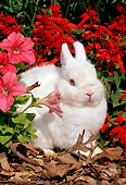 RAB 01 LS0002 01