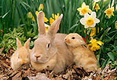 RAB 01 LS0003 01