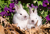 RAB 01 LS0006 01
