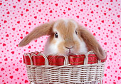 RAB 01 RC0001 01
