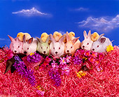 RAB 01 RK0031 12