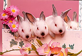 RAB 01 RK0053 01