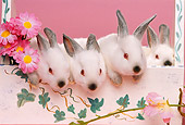RAB 01 RK0053 05