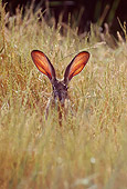RAB 01 TL0002 01
