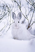 RAB 01 TL0003 01