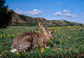 RAB 01 TL0004 01