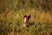 RAB 01 TL0007 01