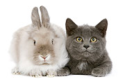 RAB 02 JE0004 01