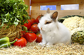 RAB 02 XA0002 01