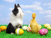 RAB 02 XA0004 01