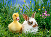RAB 02 KH0002 01