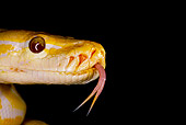 REP 01 JZ0001 01