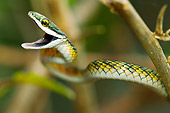 REP 01 MC0002 01