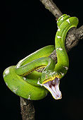 REP 01 MC0008 01