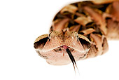 REP 01 MH0002 01