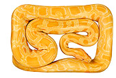 REP 01 MH0007 01
