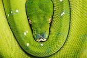 REP 01 MH0009 01