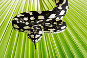 REP 01 MH0010 01