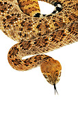 REP 01 MH0011 01