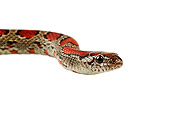 REP 01 MH0018 01