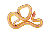 REP 01 MH0020 01