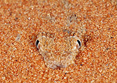 REP 01 MH0031 01