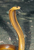 REP 01 MH0032 01