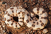 REP 01 MH0035 01