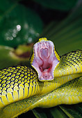 REP 01 MH0042 01