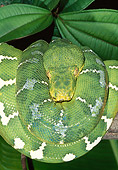 REP 01 MH0046 01