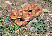 REP 01 RK0034 02