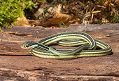 REP 01 WF0001 01