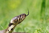 REP 01 WF0003 01