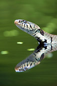 REP 01 WF0005 01