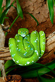 REP 01 KH0001 01