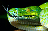 REP 01 KH0003 01