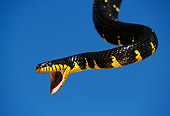 REP 01 RK0044 06