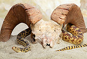 REP 01 TK0001 01