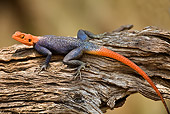 REP 02 JZ0001 01