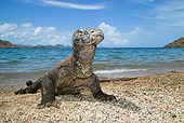 REP 02 MC0003 01