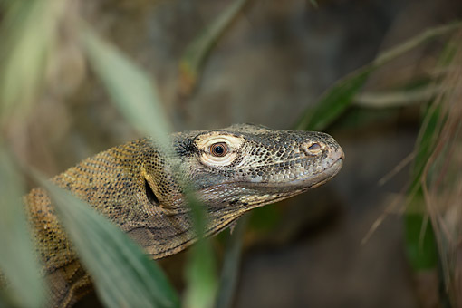 REP 02 MC0007 01