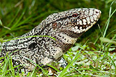 REP 02 WF0002 01
