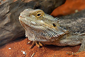 REP 02 WF0003 01