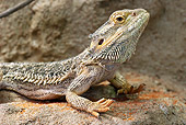 REP 02 WF0004 01