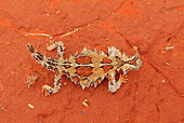 REP 02 WF0006 01