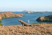 REP 02 WF0017 01