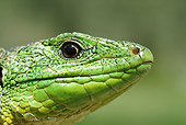 REP 02 WF0020 01
