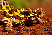 REP 02 KH0004 01