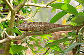 REP 03 AC0022 01